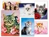 Obrázek Pohlednice dětské s koťátky - mix motivů